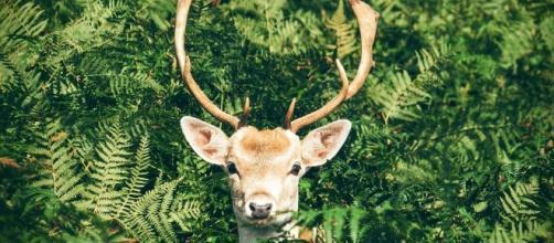 Deer Photo CC0 public domain pixabay.comc