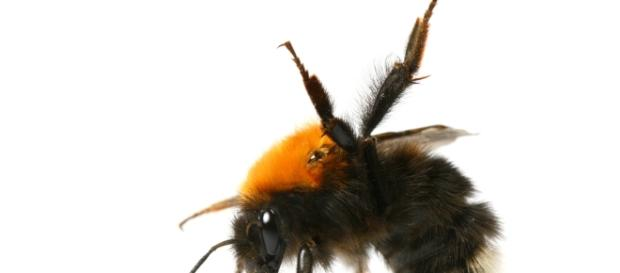 Insects have impressive brains | DiscoverMagazine.com - discovermagazine.com