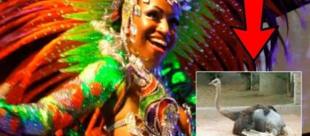 Musa do Carnaval e o sofrimento dos animais de pena - Google