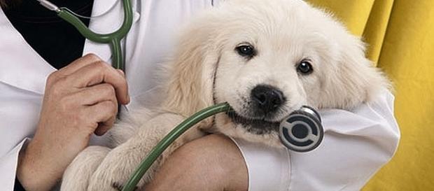 Come detrarre le spese veterinarie: tutte le informazioni