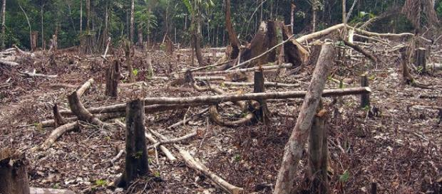 Maderera Maya y Aserraderos Bonampak han contribuido a la tala inmoderada.. - sputniknews.com