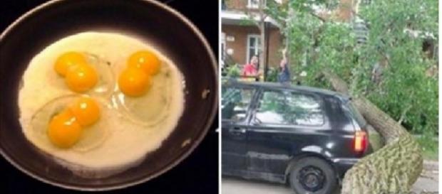 Três ovos com duas gemas cada um