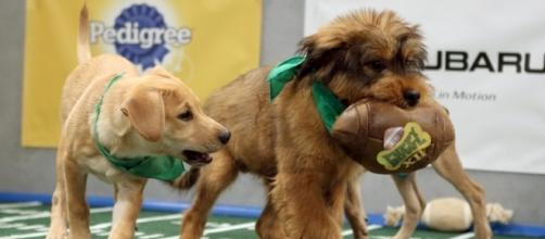 2017 Puppy Bowl kickoff time - sportsinteraction.com