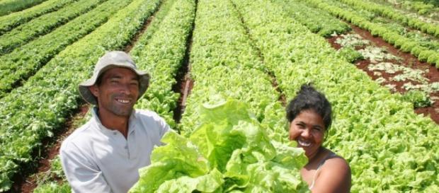 La agricultura sustentable en países en vías de desarrollo