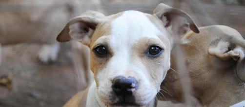 ASPCA Blog Feed - UDA wants to remove animal database - rssing.com