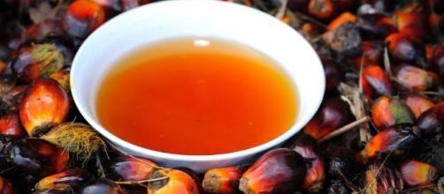 Óleo de palma, o óleo mais famoso do mundo