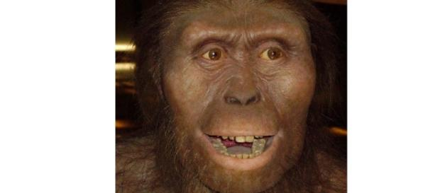Algumas pessoas acreditam que o ser humano evoluiu do macaco.