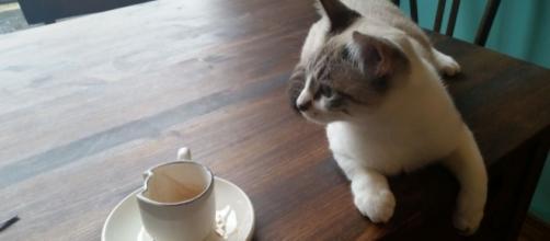 Crazy Cat Cafè Milano, @annibelleph