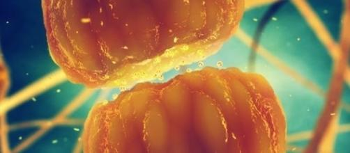 Durante il sonno le sinapsi rimpiccioliscono