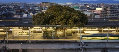 Giappone, stazione attorno ad albero secolare.