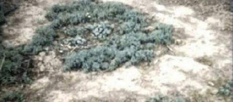 Dr. Erol Faruk afirma que um OVNI provocou esta formação no solo (Crédito: YouTube/BrightInsight)