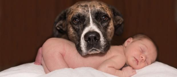 baby and dog, Karenwarfel, pixabay.com cc0