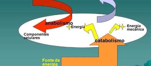 Metabolismo: conjunto de reações químicas no corpo humano
