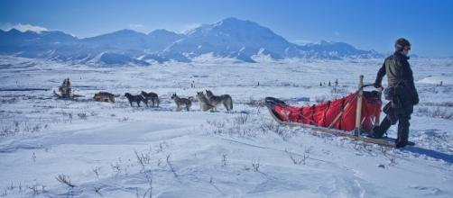 American Dog Derby needs snow and cold Photo: https://pixabay.com/en/dog-sled-snow-wilderness-mountains-1758486/