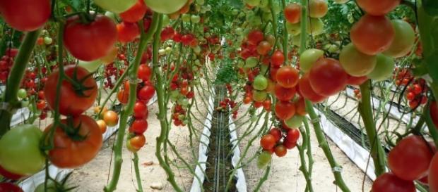 Empresas aseguran su éxito importando insumos agrícolas.