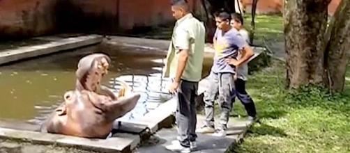 El Salvador Violence: Beloved Hippo 'Gustavito' Killed at Zoo ... - nbcnews.com