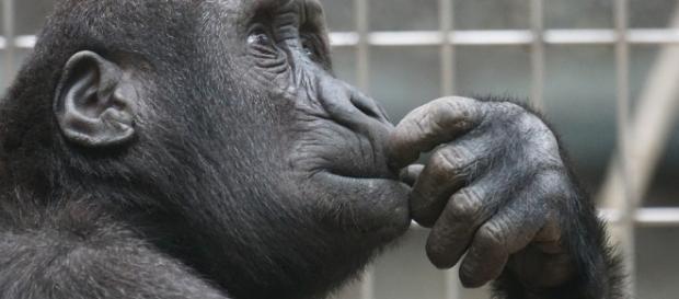 Primate - Free images on Pixabay - pixabay.com