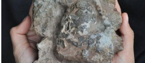 Oldest croc eggs discovered in dinosaur nest - BBC News - bbc.com