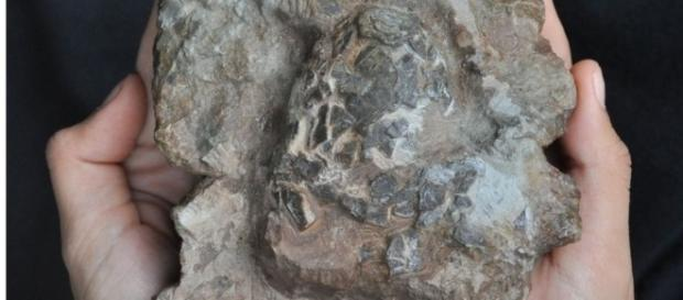 Oldest croc eggs discovered in dinosaur nest - BBC News - bbc.com