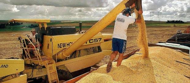 Safra recorde de grãos brasileira de 219 milhões de toneladas.