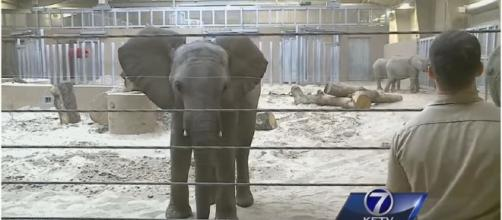 Swaziland elephants in captivity in the USA / Photo screencapped from KETV youtube
