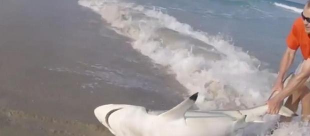 Homem salva tubarão de algo que poderia ter tirado a vida do animal
