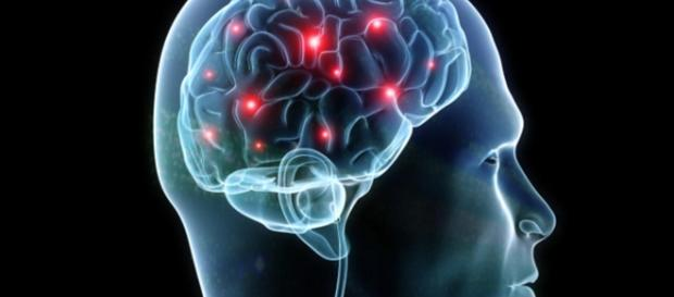 The human brain - CBS News - cbsnews.com