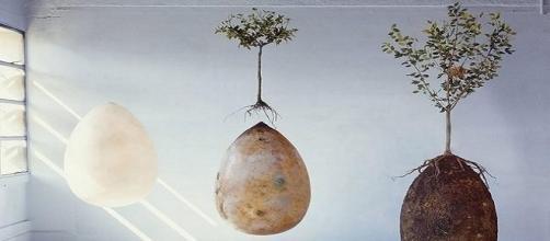 Cápsula orgânica transforma pessoas em árvores.