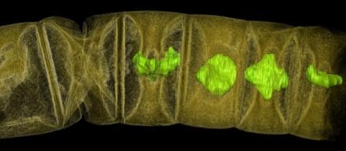 World's oldest plant-like fossils discovered | EurekAlert! Science ... - eurekalert.org