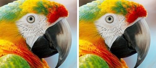 Estudos comprovam que percepção a detalhes está relacionado a QI - Bright Side