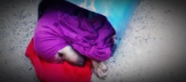Cão é enterrado vivo após ser abusado com pau pelo dono em SP; imagem forte