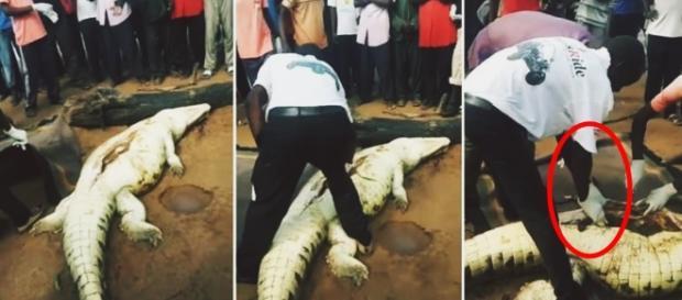 Criança é achada morta na barriga de crocodilo - Google