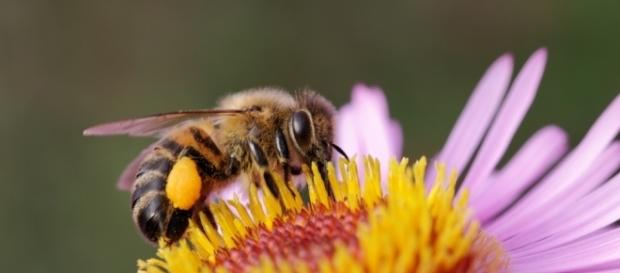 Why Honey Bees can save the World - rileys.co.im