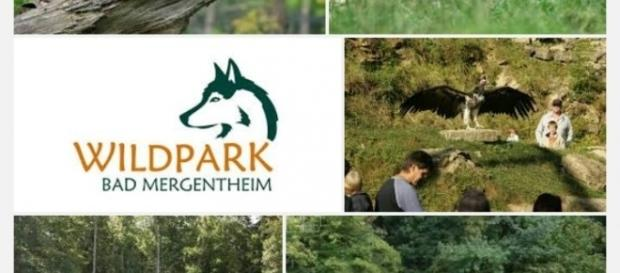 Wildpark Bad Mergentheim der grösste Europas