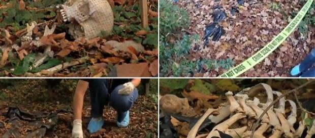 1000+ images about The Body Farm on Pinterest | Tennessee, Popular ... - pinterest.com