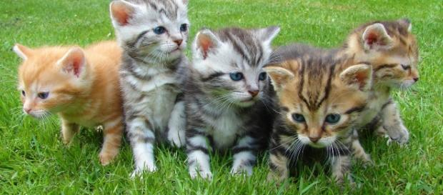 Kittents - via Pexels - CC BY -