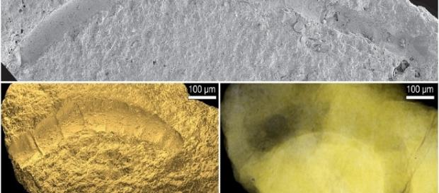 Scientists Discover Oldest Fossil Plants ... - techtimes.com