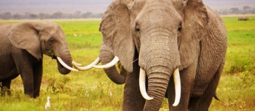 China's Ivory Ban - treadright.org