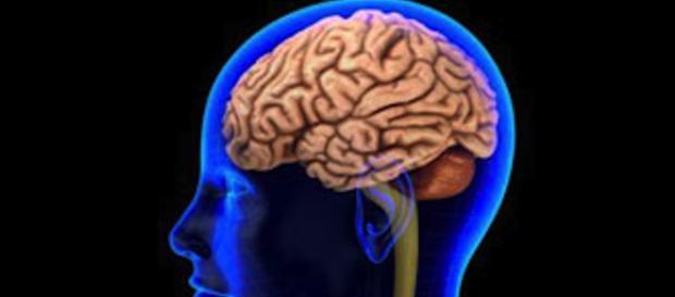 Brain tumors - theverge.com/2017/2/6/14525164/stem-cells-human-skin-brain-cancer-tumors-glioblastoma