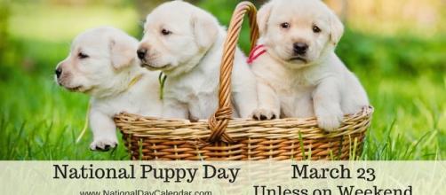 1000+ ideas about National Day Calendar on Pinterest | National ... - pinterest.com