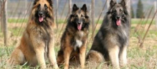 Dogs have gotten smarter over the years / Photo via New epilepsy gene located in dogs -- ScienceDaily - sciencedaily.com