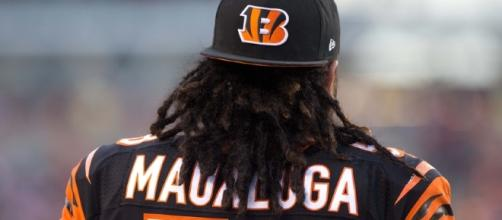 Rey Maualuga: Are the Bengals Moving On? - stripehype.com