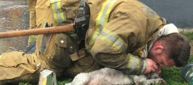 O bombeiro deu tudo para salvar o animal