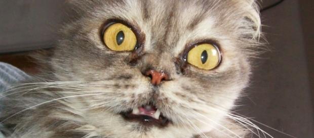 As fotos de gatos estão cada vez mais populares