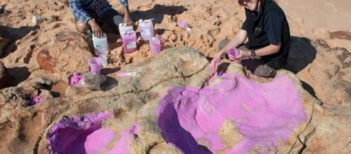 Australie : découverte rare d'empreintes de dinosaures - Le Parisien - leparisien.fr