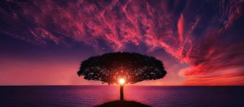 Nature gives us everything, including peace of mind / Photo via https://static.pexels.com/photos/36717/amazing-animal-beautiful-beautifull.jpg