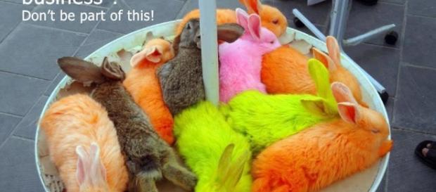 Tierrechtler protestieren gegen gefärbte Küken | Tierschutz4all - tierschutz4all.de