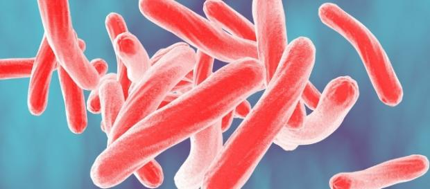 Blood test could transform tuberculosis diagnosis, help monitor ... - stanford.edu