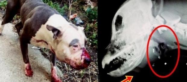 Boca de cão estava cheia de sangue e ele levou tiro - Google