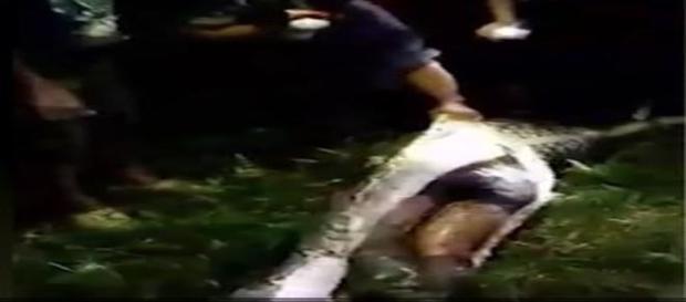 Homem de 25 anos é devorado por cobra na Indonésia (Viral Press)
